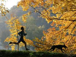 dog breeds for runners